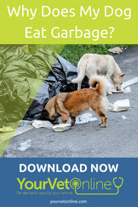 Why Does My Dog Eat Garbage How To Prevent It Your Vet