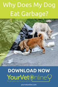 why does my dog eat garbage