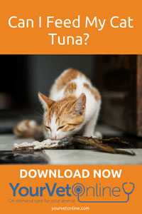 How Much Tuna Can I Feed My Cat