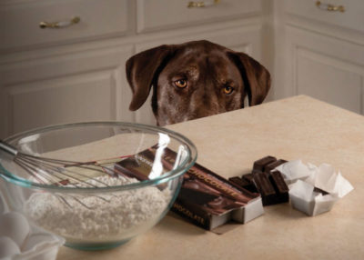 chocolate is toxic to dogs and cats