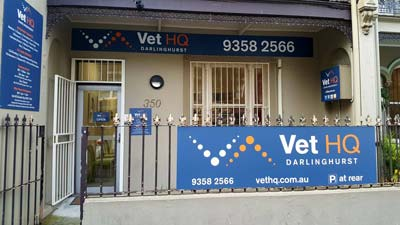 Vets-near-me-why-are-they-so-expensive?