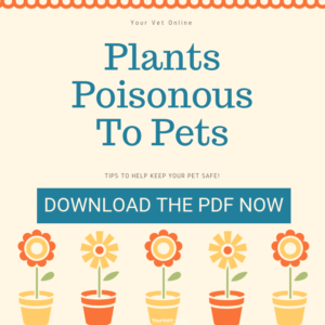 top ten poisonous plants for pets