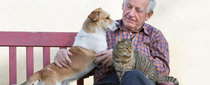 pet insurance ensures you can afford to treat your pet