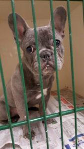 non core puppy vaccines