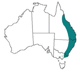 Location of Paralysis Tick In Australia