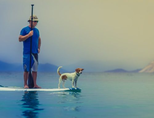 Top Tips To Survive Summer Holidays With Your Pets