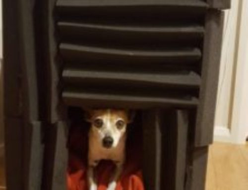My Dog Is Scared Of Thunder – How To Calm Your Dog During A Thunder Storm