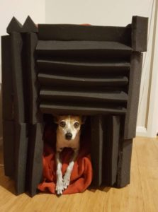 Pad the kennel with noise prevention foam
