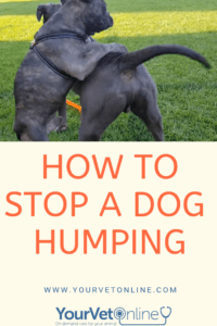 what does it mean when a dog humps you