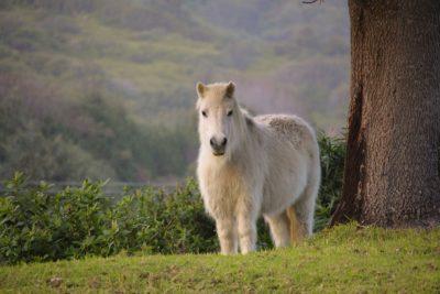 PPID in pony