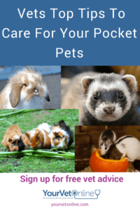 how to care for pocket pets