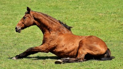 colic in horses