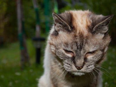 old cat dementia