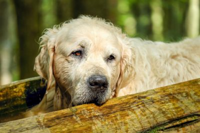 old dog dementia does my pet have dementia