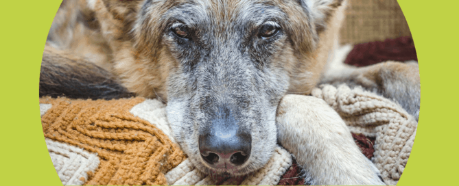 signs of dementia in cats and dogs
