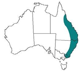 Location australian paralysis tick