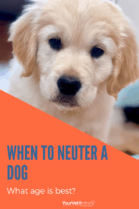 when to neuter a dog what age is best