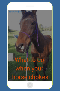symptoms of choke in horses and what to do when your horse chokes
