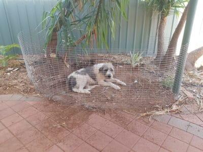 Garden fence fail dog still got in