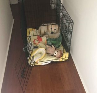 crate training makes bringing home a puppy so much easier