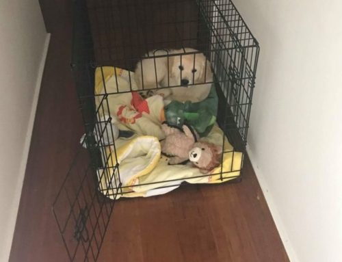 Why crate training makes bringing home a puppy so much easier