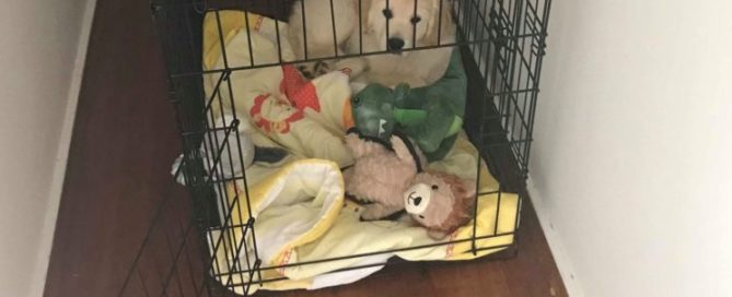 puppy in crate with toys