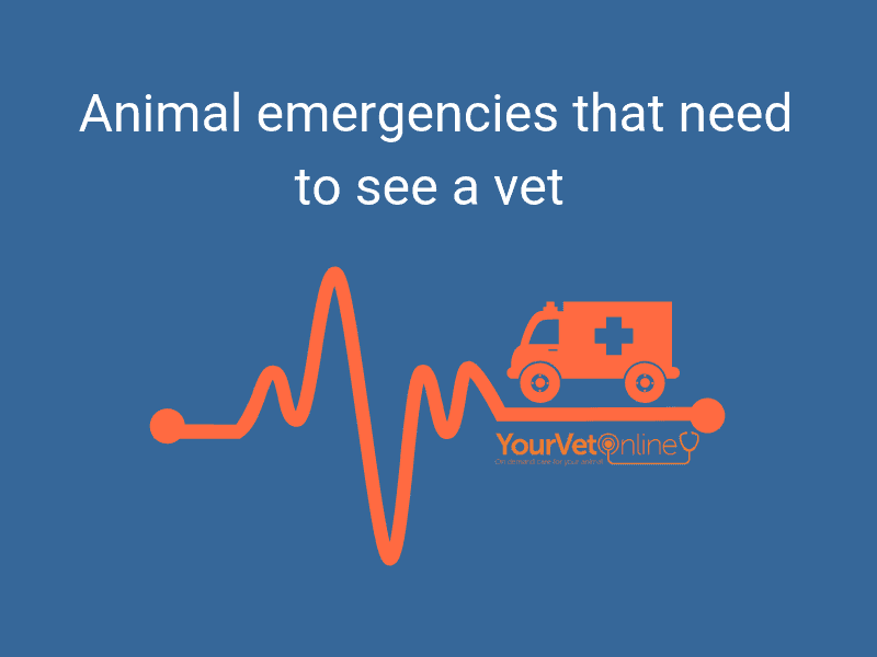 emergency vet care for your pets and horses 24/7 emergency vet