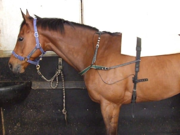 horse fitness training programs can utilise technology to record stress that might be occuring.