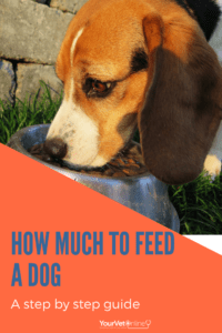 how much to feed a dog
