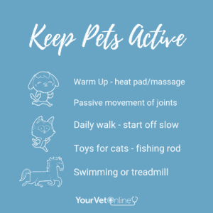 keep pets active infographic
