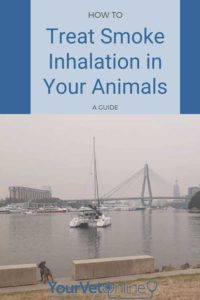 pinterest pin for treatment smoke inhalation for pets