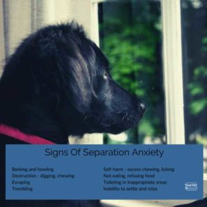 aigns of separation anxiety infographic