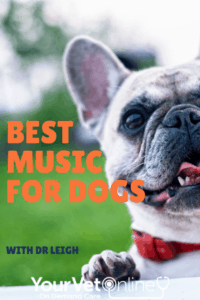 pinterest pin for best music for dogs