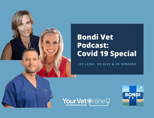 Dr Leigh Bondi Vet Podcast Coronavirus