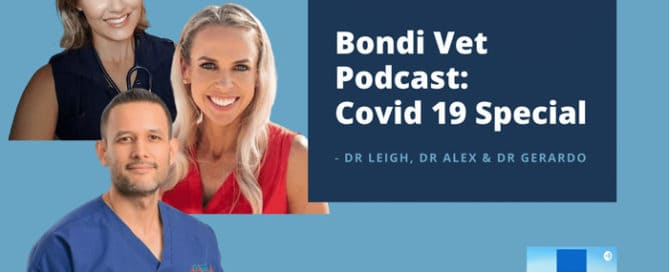 bondi vet dr alex dr gerardo dr leigh podcast
